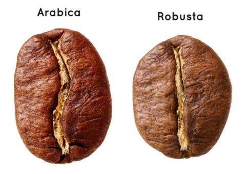 robusta_i_arabika_2